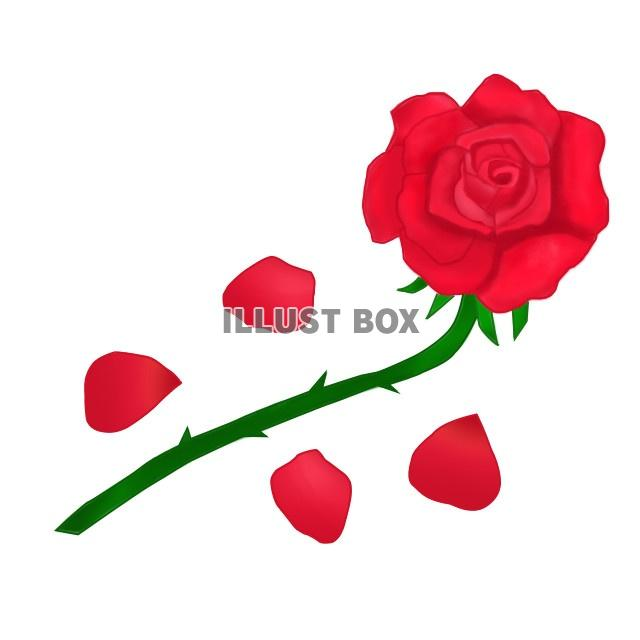 無料イラスト 真っ赤な薔薇