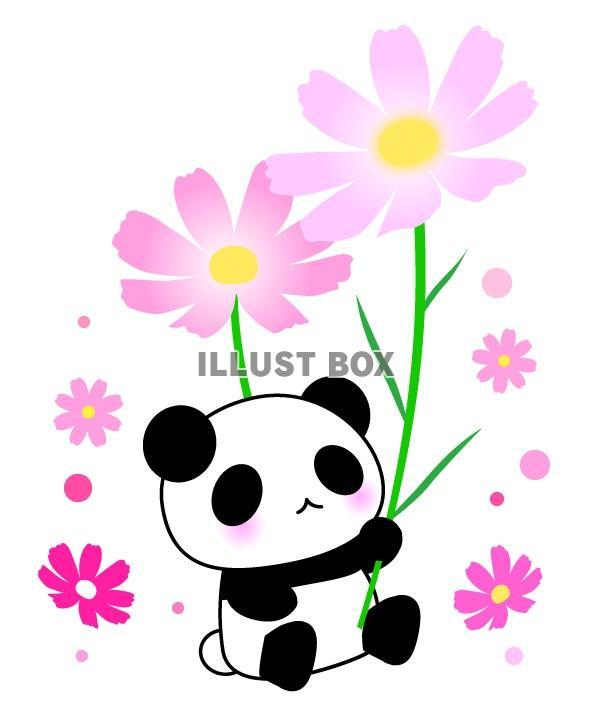 無料イラスト 可愛いパンダとコスモスの花のイラスト