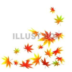 紅葉・秋の葉のイ…