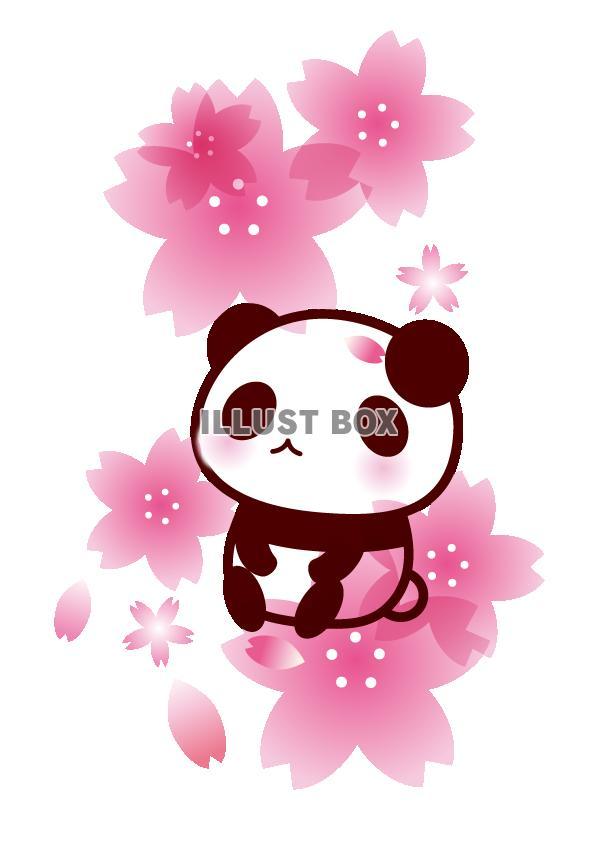 カレンダー カレンダー ダウンロード かわいい : 桜とパンダのイラスト【透過PNG ...