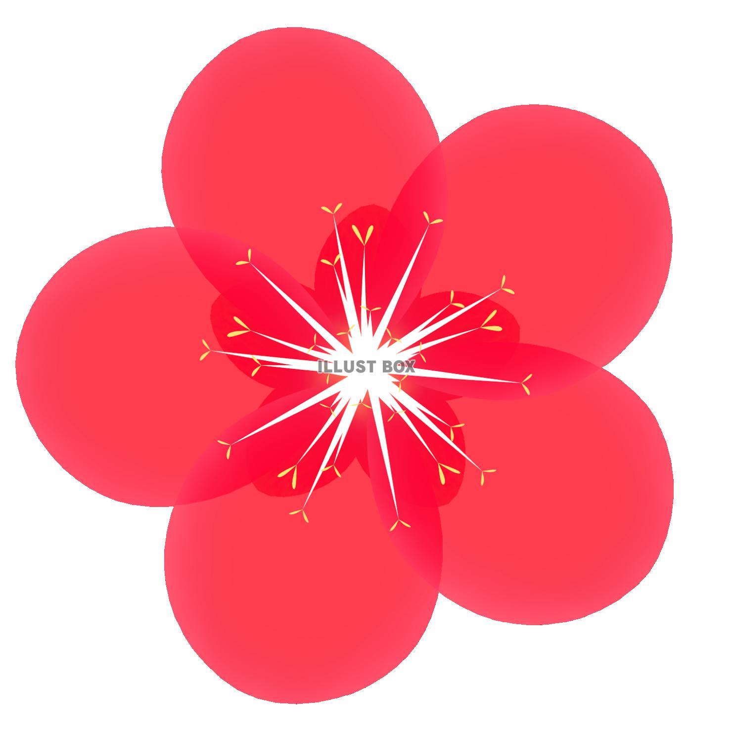 無料イラスト 梅の花