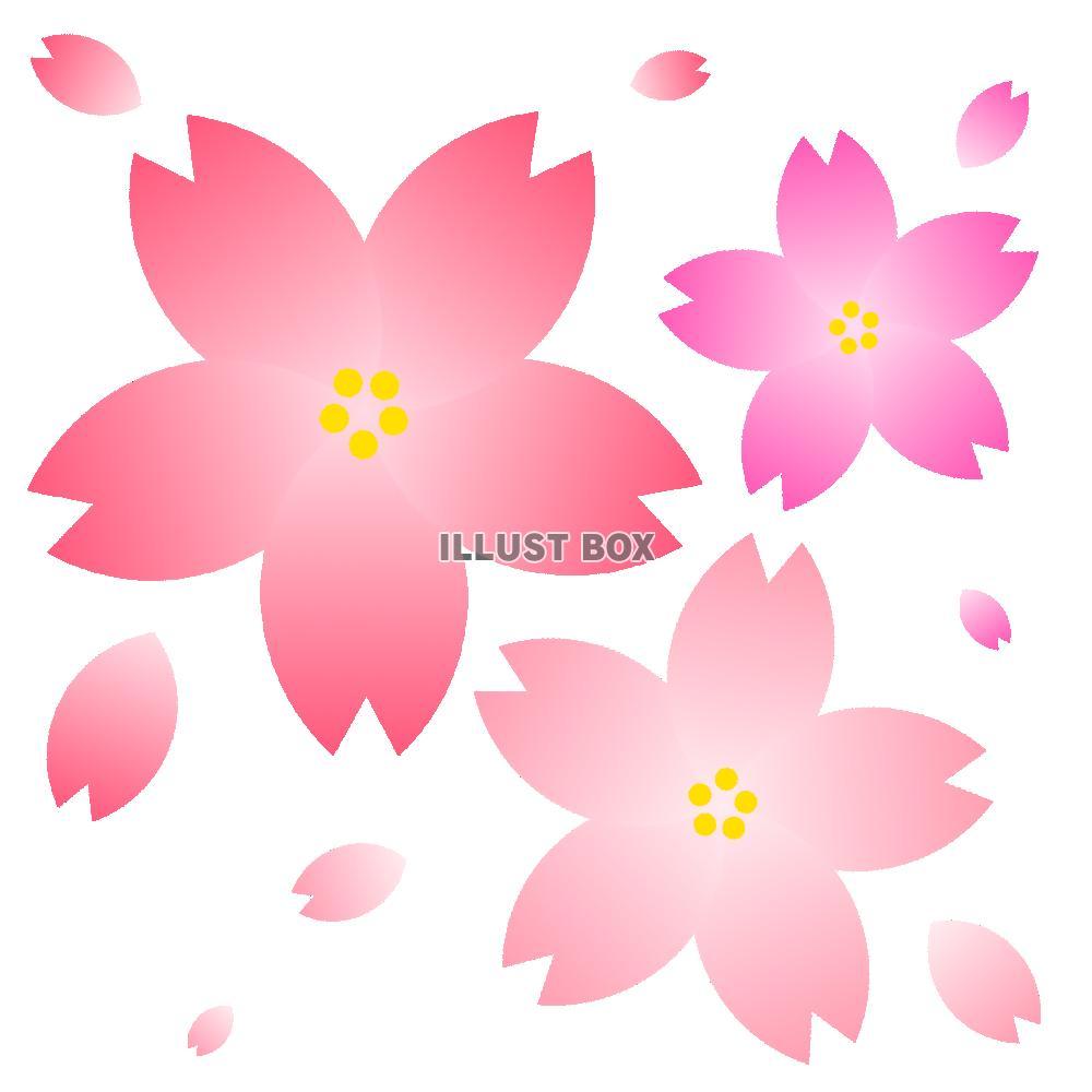 無料イラスト 桜の花たち【透過png】【eps】