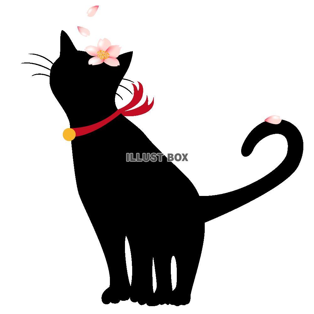 無料イラスト 透過pngイラスト 黒猫と桜の花びら