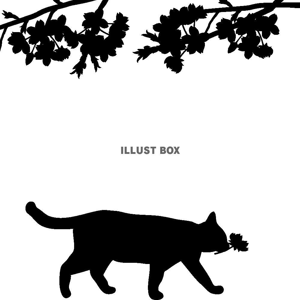 無料イラスト 透過pngイラスト シルエット 桜と猫02