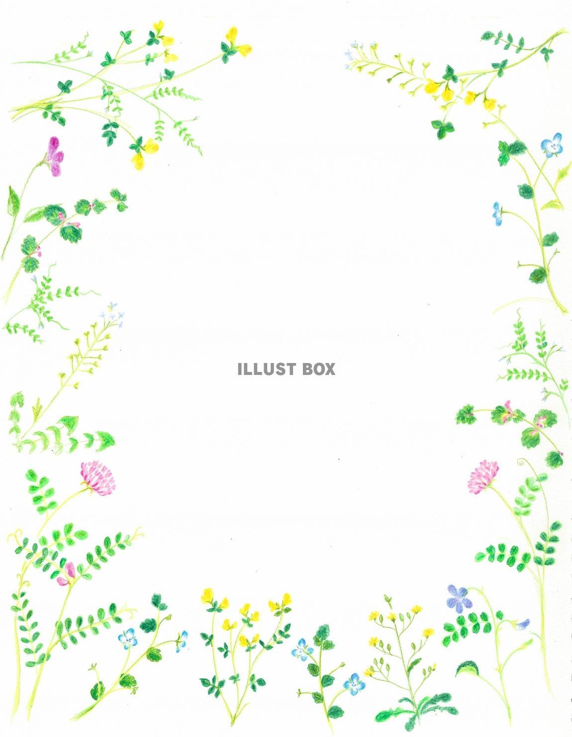 無料イラスト 春めく野の花✿手描きフレーム 縦