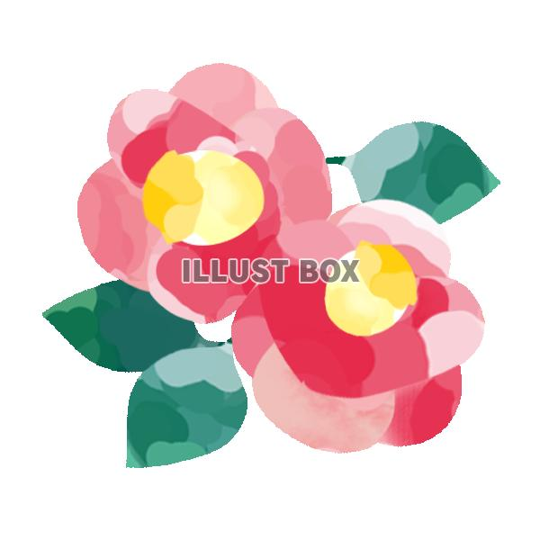 無料イラスト 椿の花 透過png