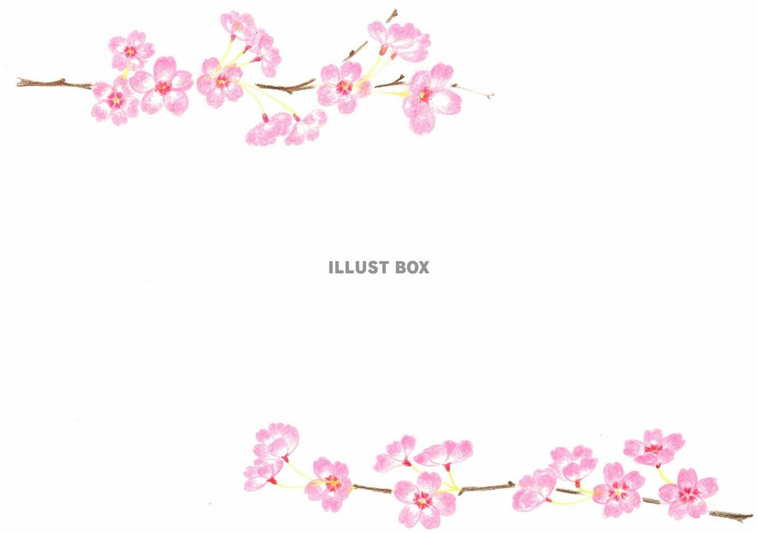 桜咲く手描きフレーム