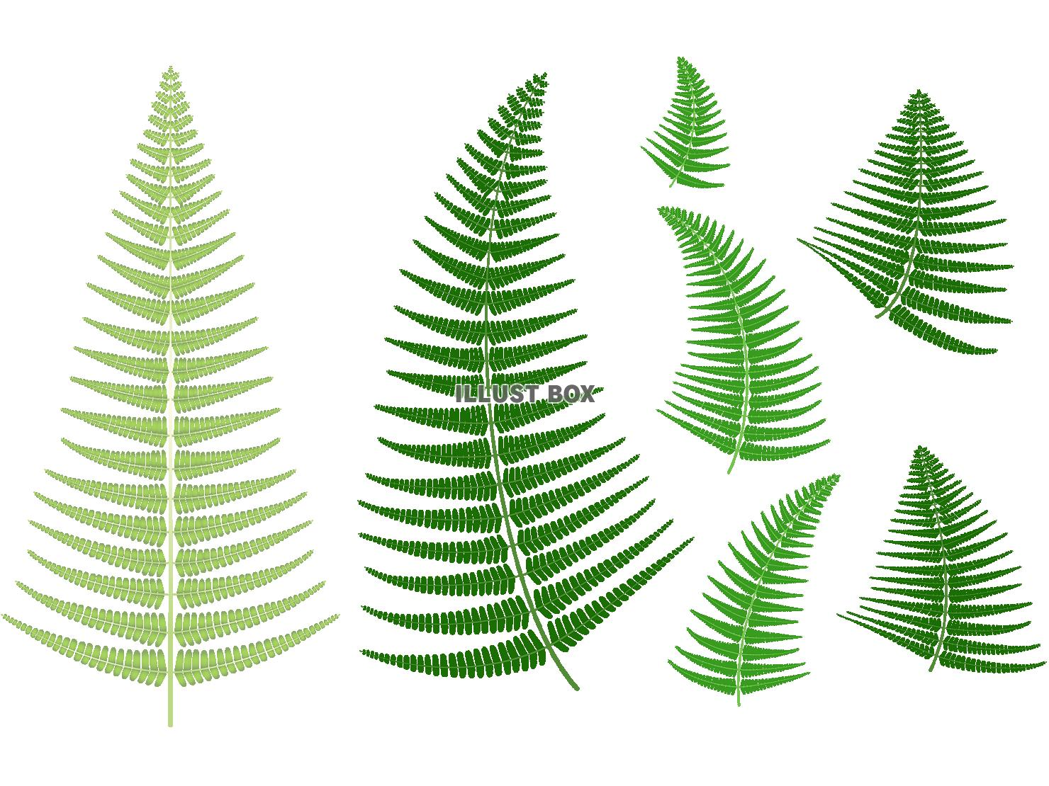シダ植物の葉 無料イラスト シダ植物の葉