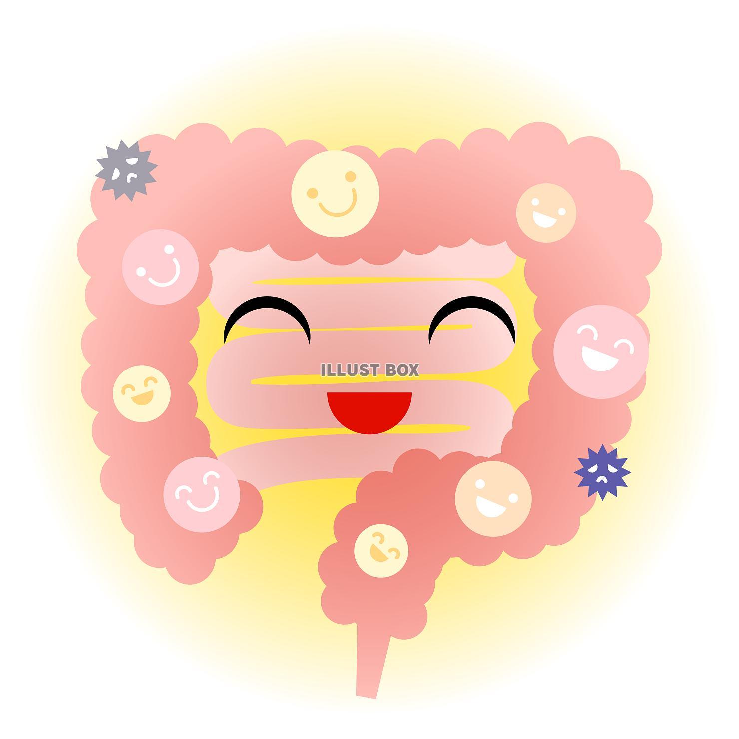 無料イラスト 好環境の小腸・大腸(png・cseps)