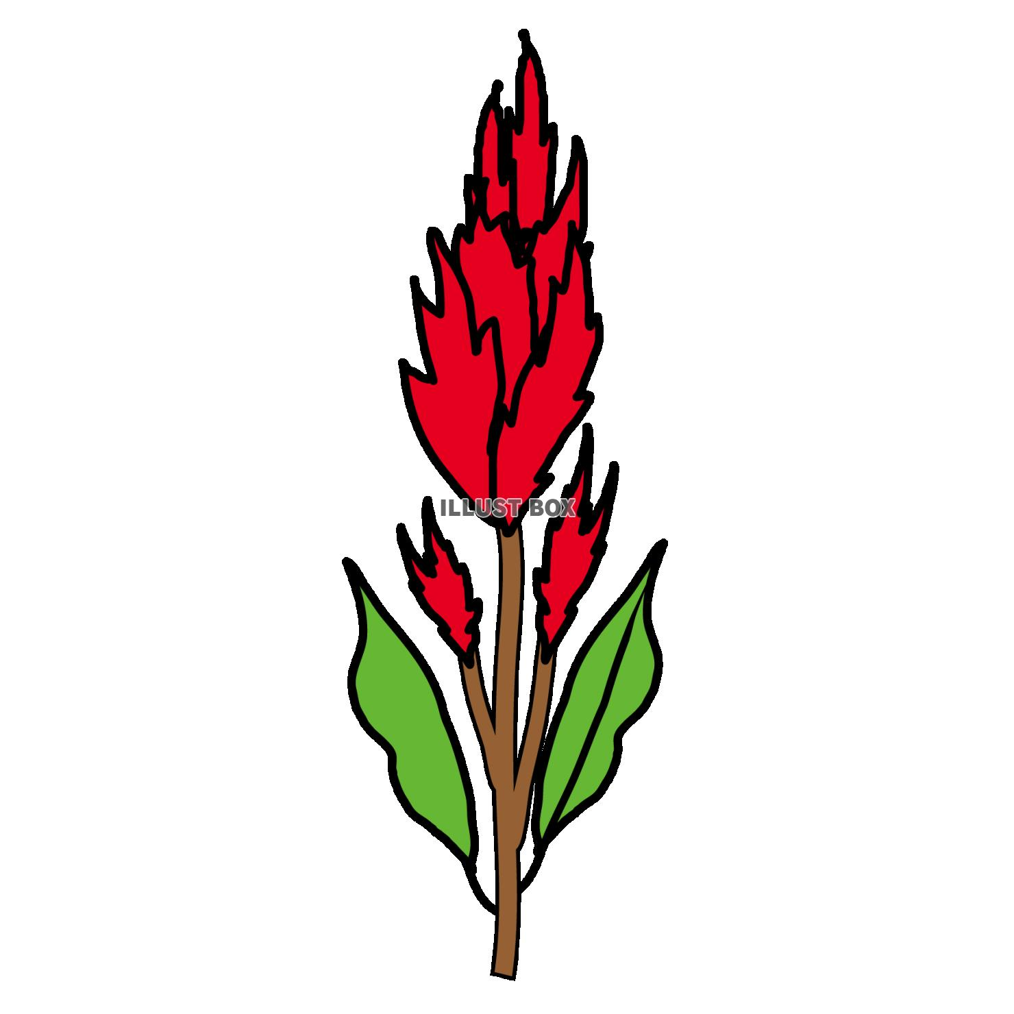 無料イラスト 羽毛鶏頭の秋の花のpng透過素材