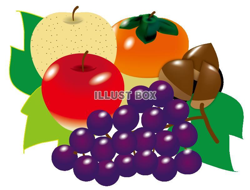 無料イラスト 秋の果物