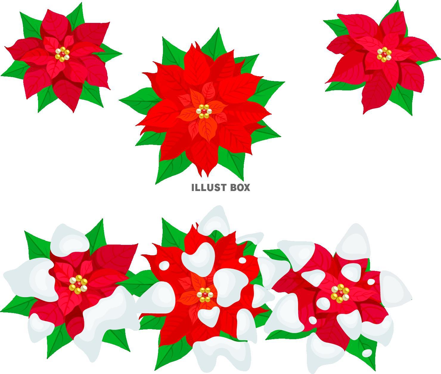 クリスマスポインセチア(png・CSeps)