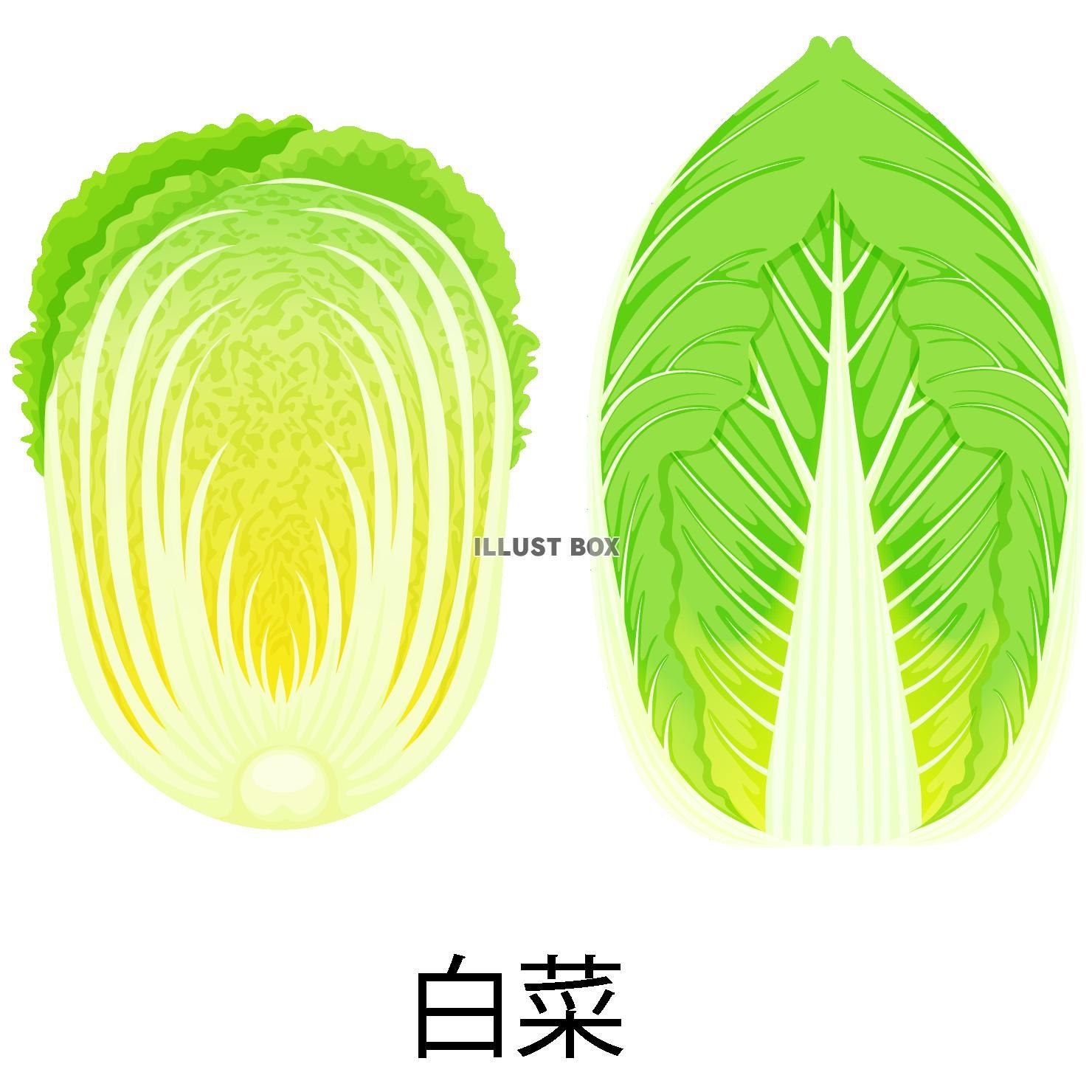 無料イラスト 白菜アイコン(png・CSeps)