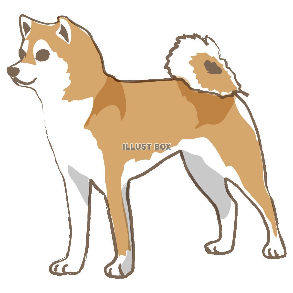 柴犬の画像 p1_32