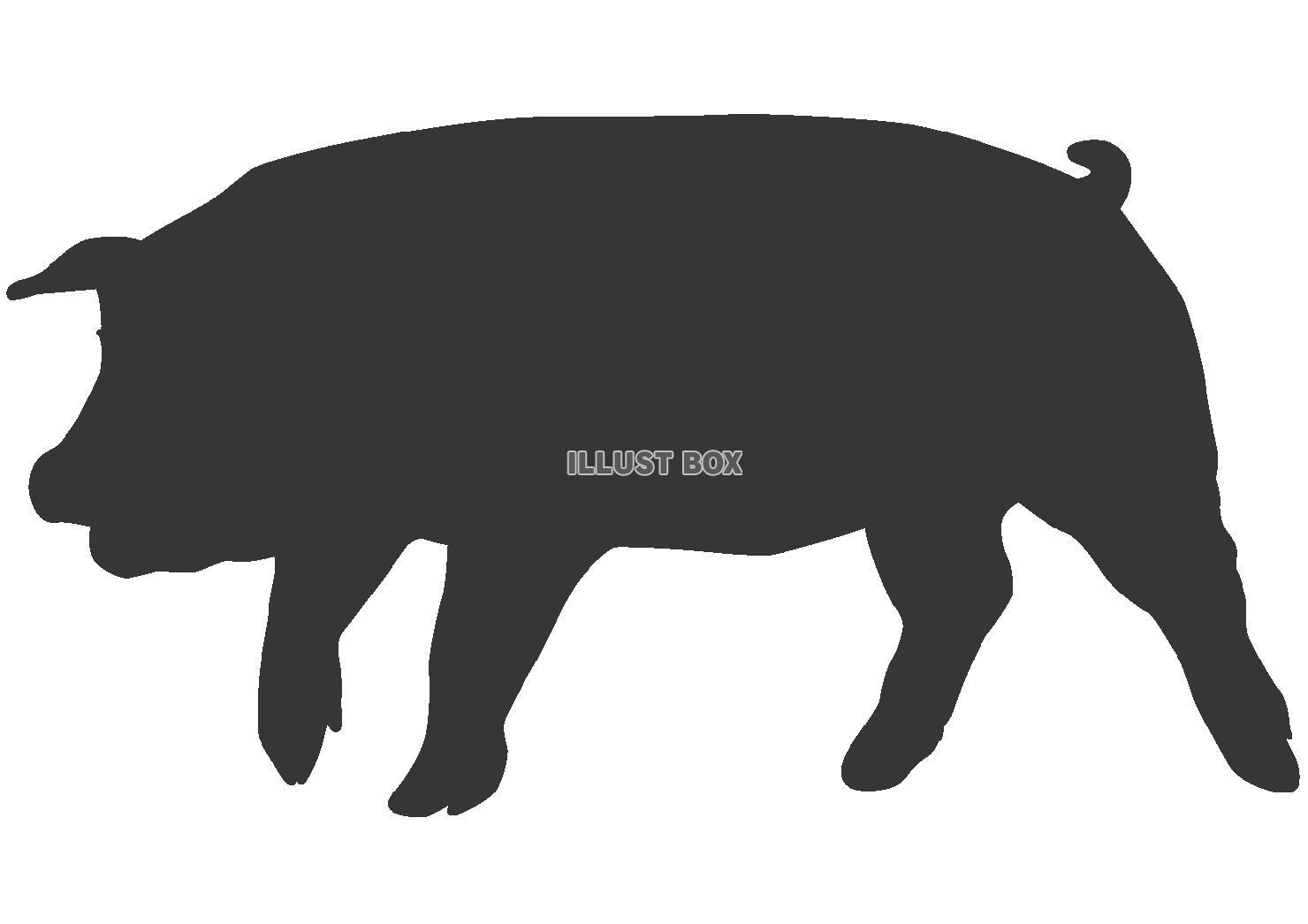 白黒 豚 イラスト フリー