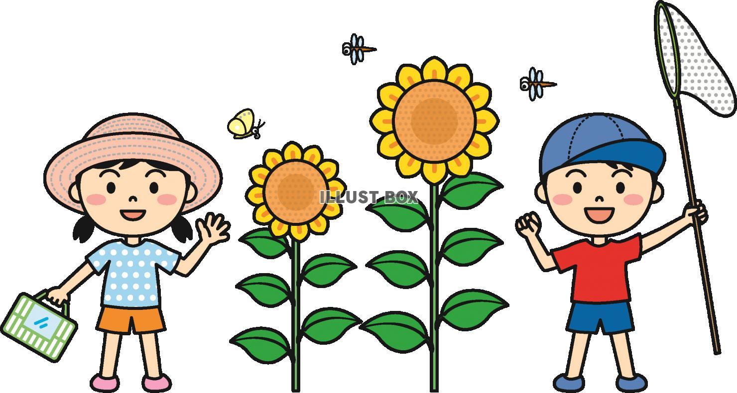 無料イラスト 夏の子供虫取りカラー