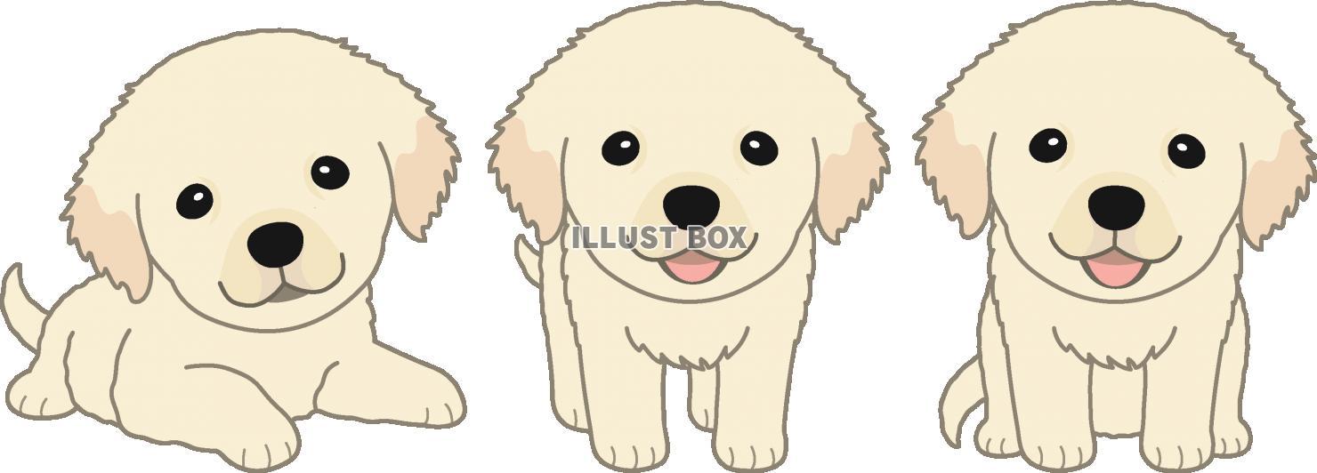 無料イラスト 子犬のゴールデンレトリバー