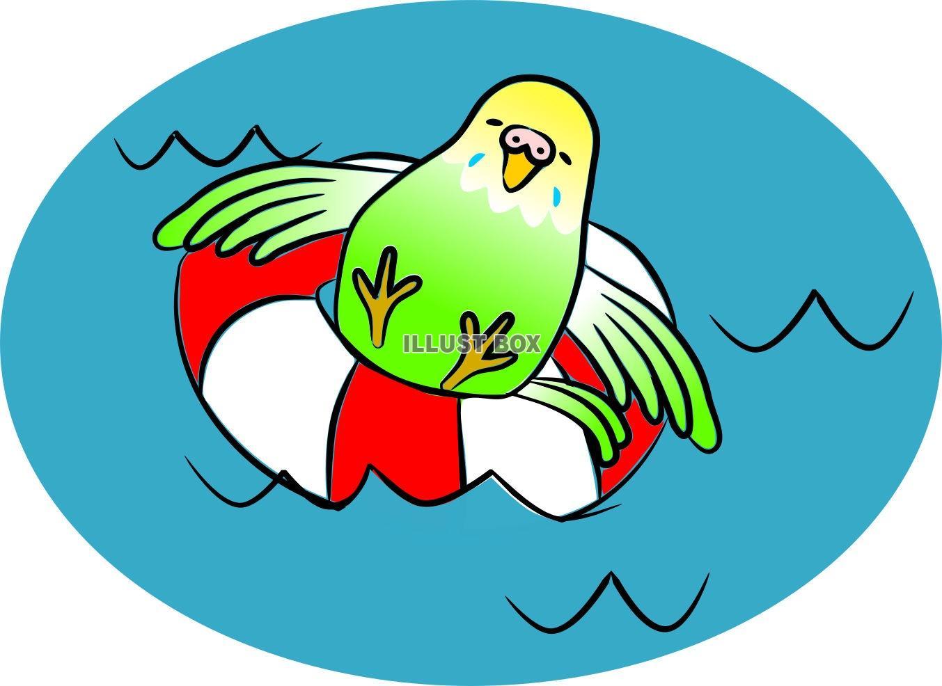 無料イラスト 水遊びするインコさんjpg