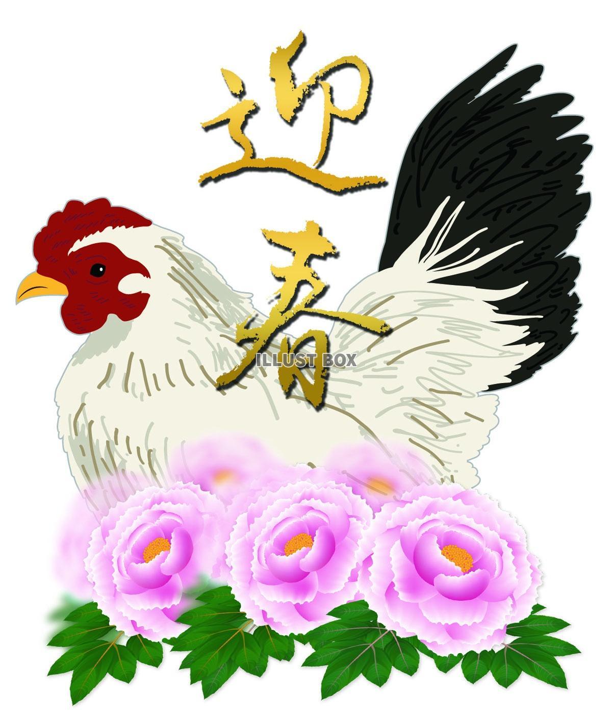 無料イラスト 迎春 チャボの雌 牡丹 【年賀状素材】 2017 酉年