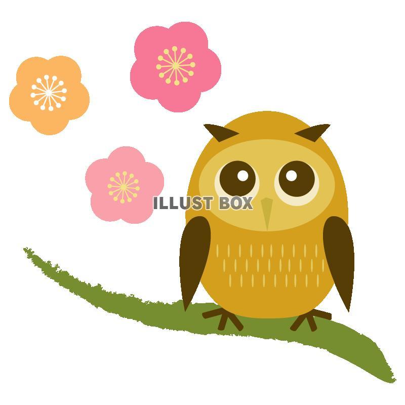 年賀状イラスト「梅とフクロウ」