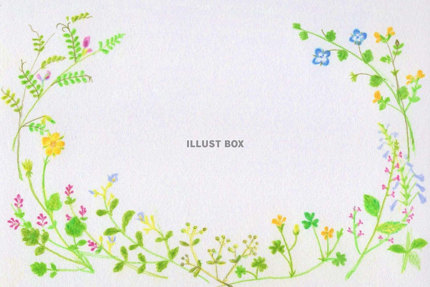 無料イラスト 春めく野の花フレーム 横