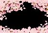 サクラ満開お祝いポストカード透過PNG画像