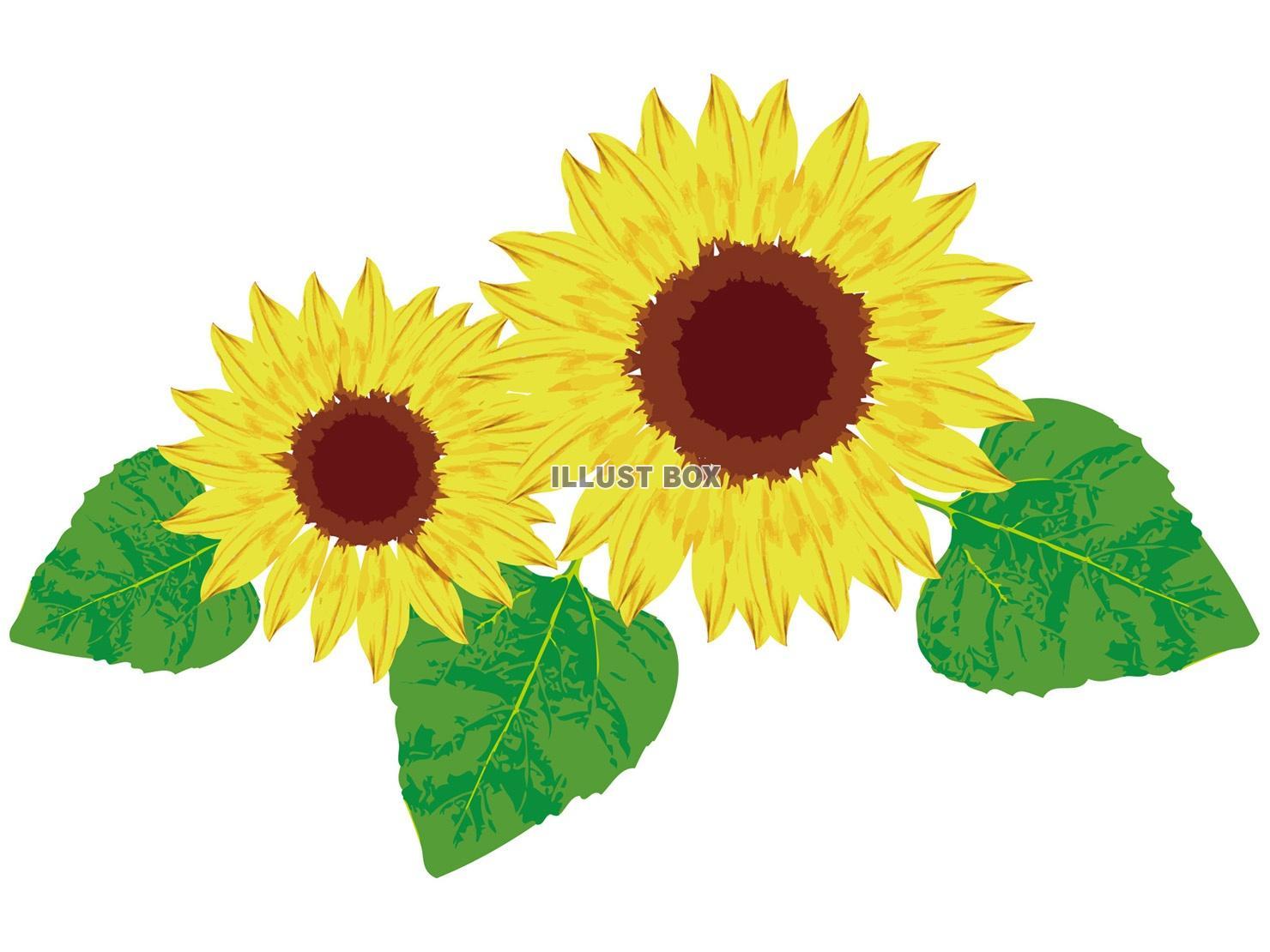 無料イラスト 夏の花植物夏ヒマワリ 茎 ひまわり 葉 向日葵季節感ワン