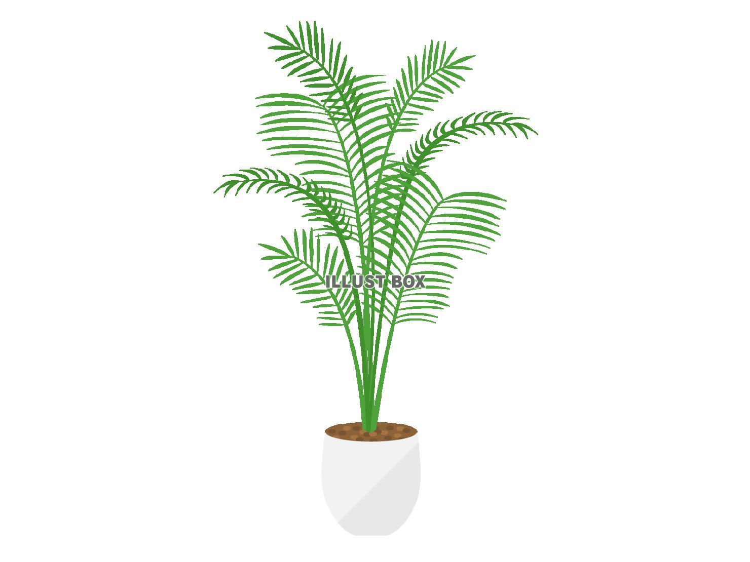 無料イラスト 観葉植物