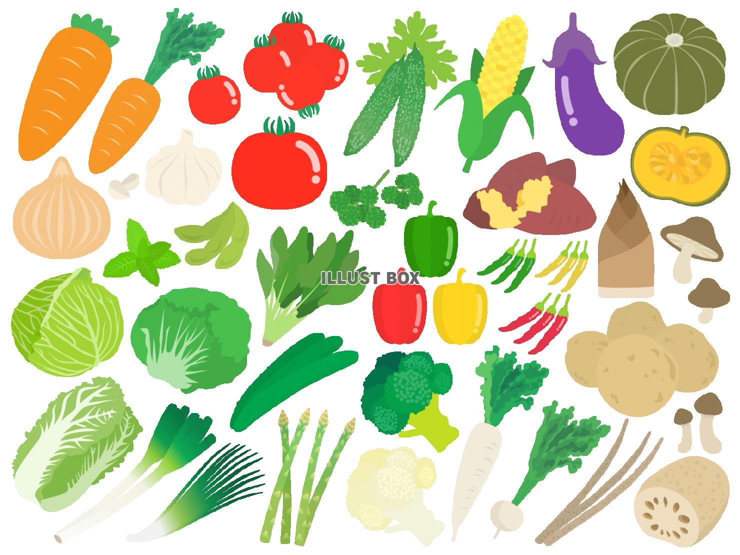 野菜 可愛い イラスト 7331 イラス