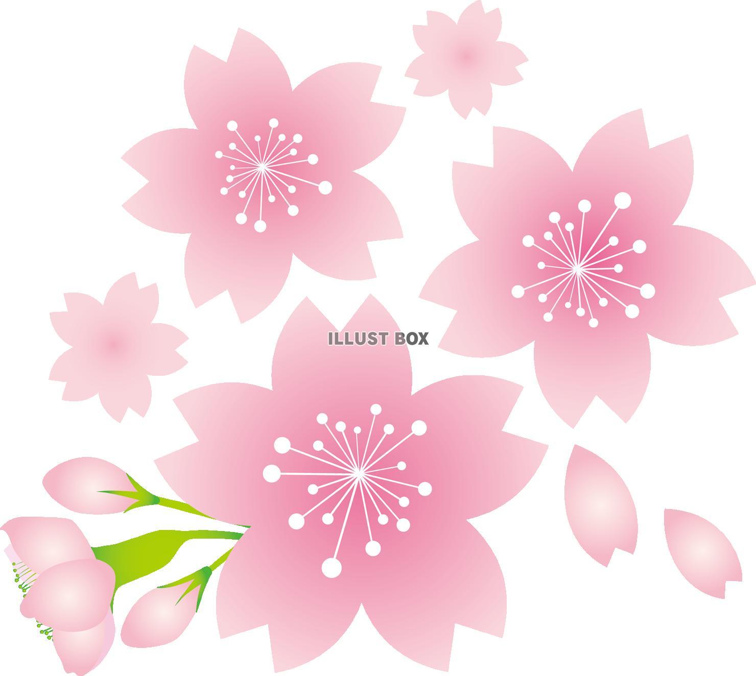 無料イラスト お花桜の花さくらの花サクラの花春植物満開お花見季節感