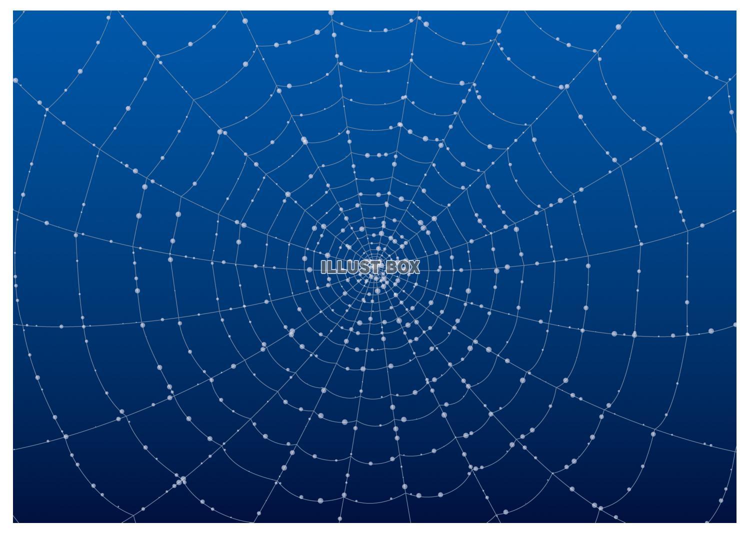 蜘蛛イラスト無料