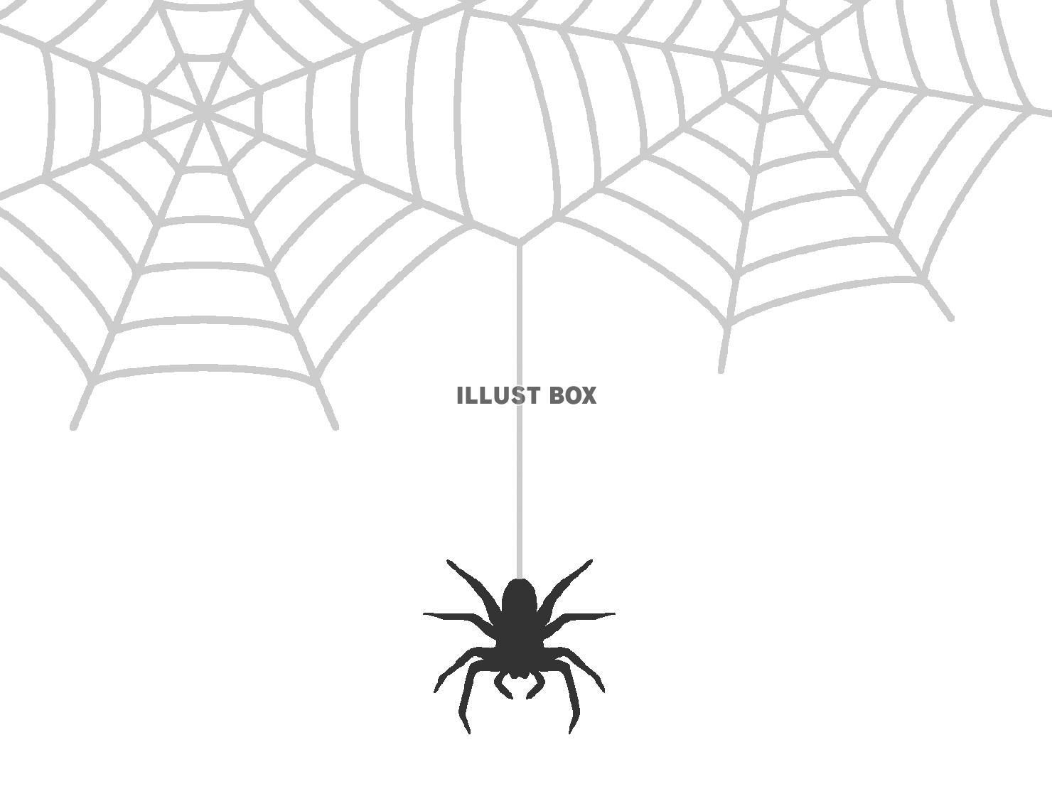 無料イラスト 蜘蛛