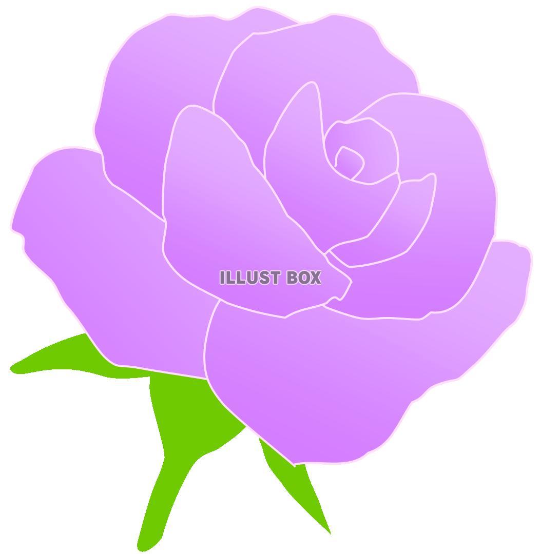 無料イラスト 紫のバラのお花