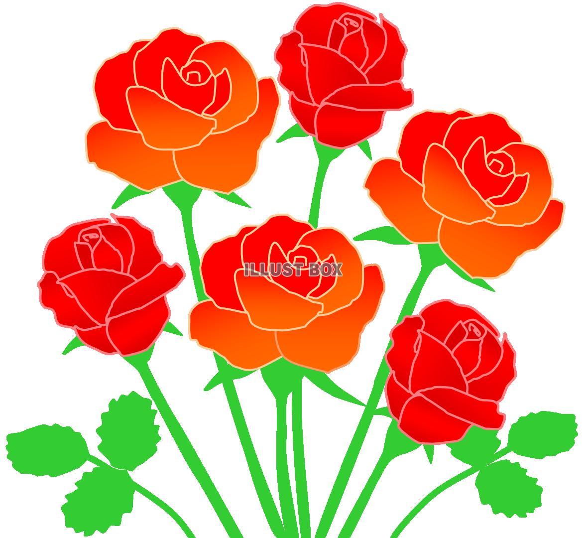 無料イラスト 赤いバラの花