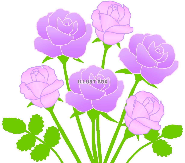 無料イラスト 紫のバラの花