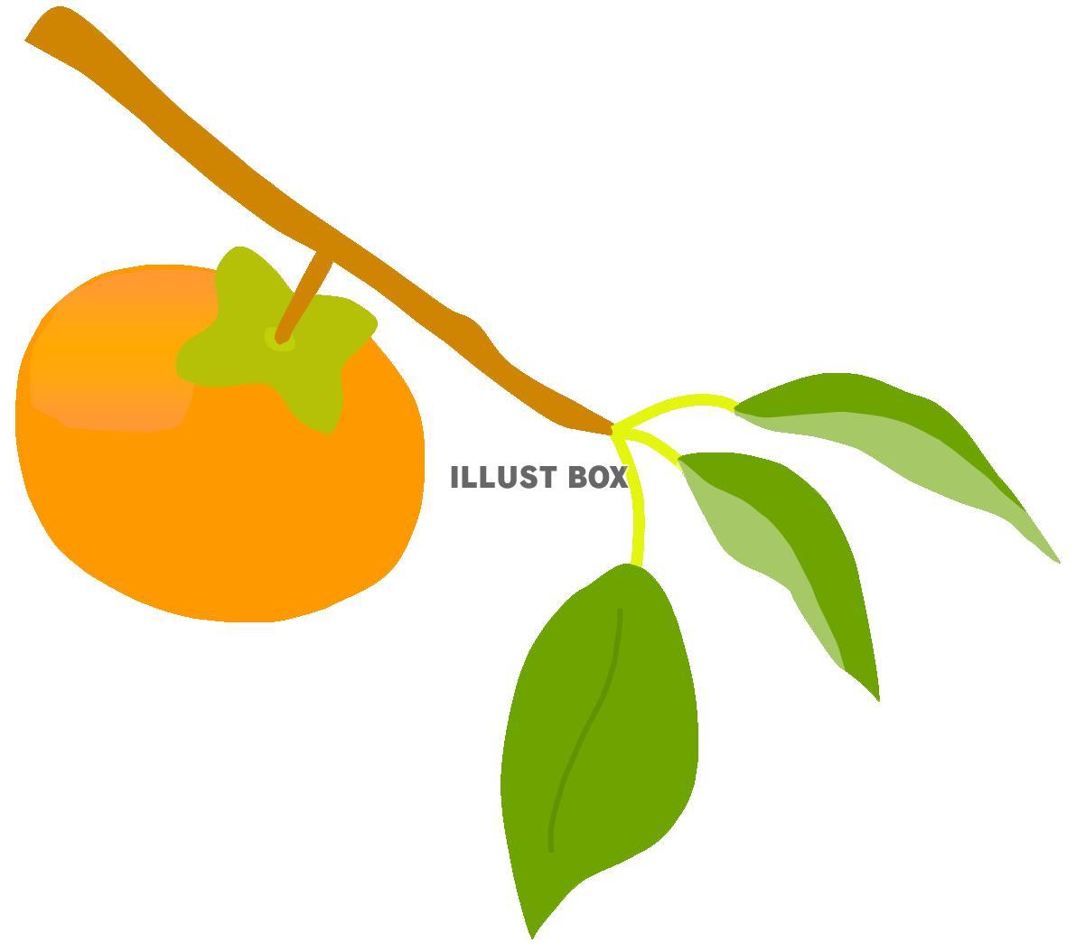 無料イラスト 柿の実1