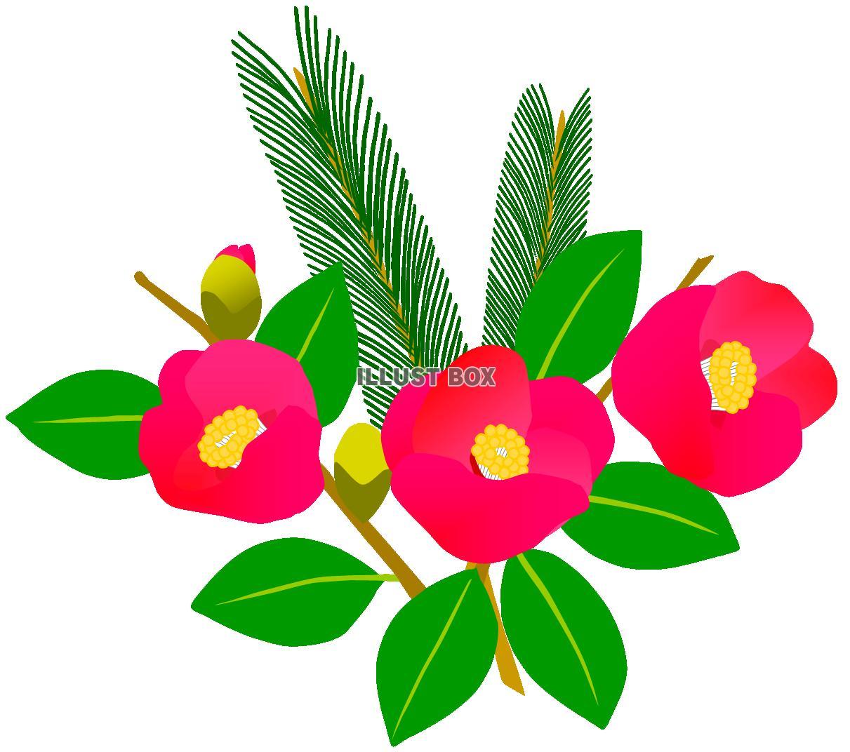 無料イラスト 赤い椿の花と松の枝