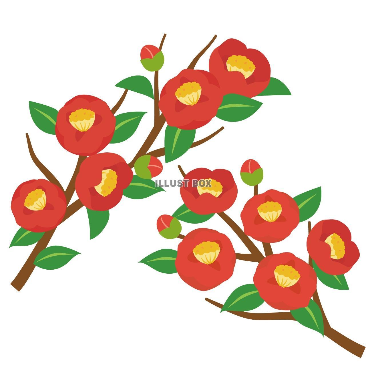 無料イラスト 椿の花