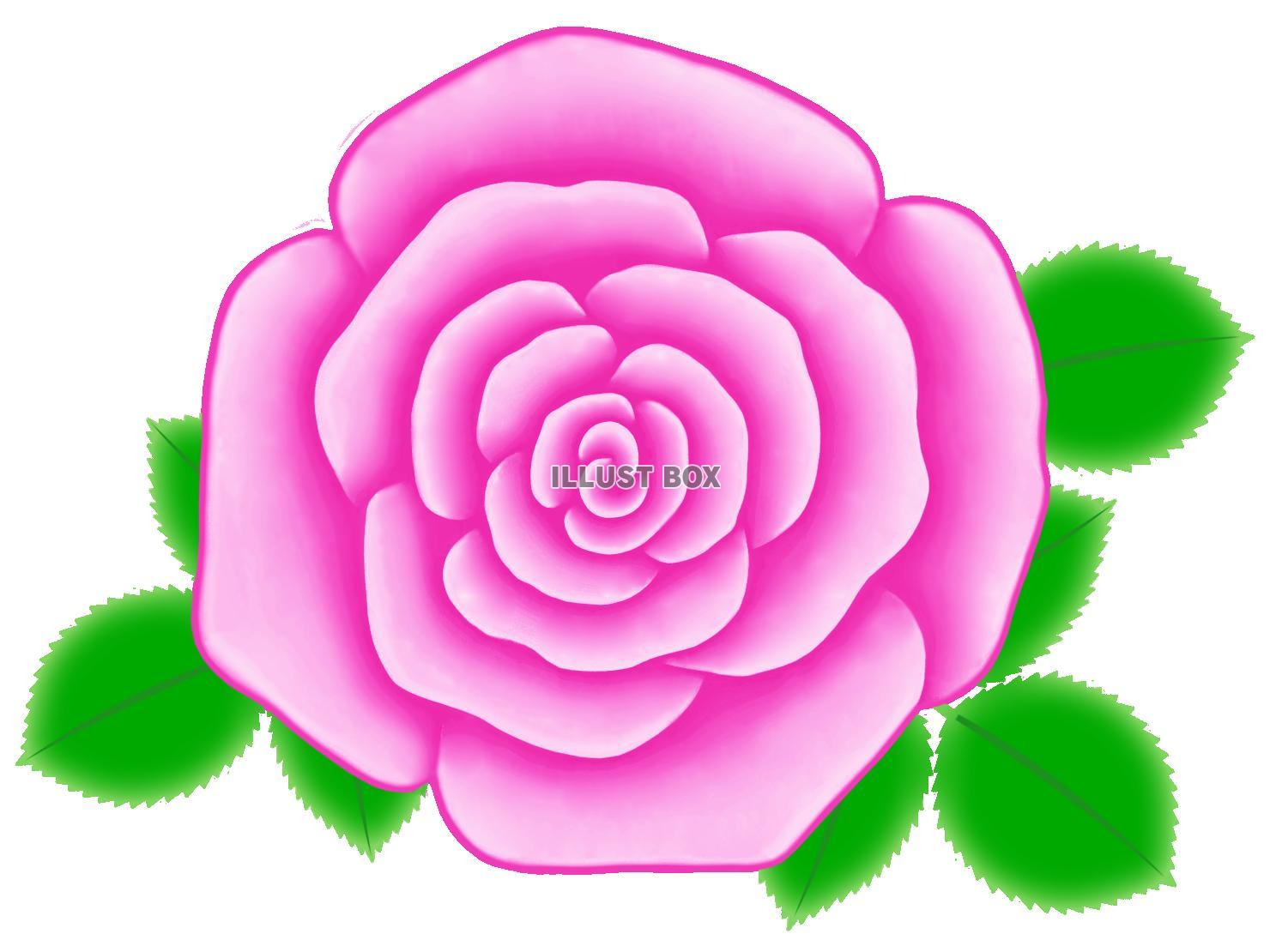 無料イラスト バラの花のワンポイントイラスト背景素材透過png