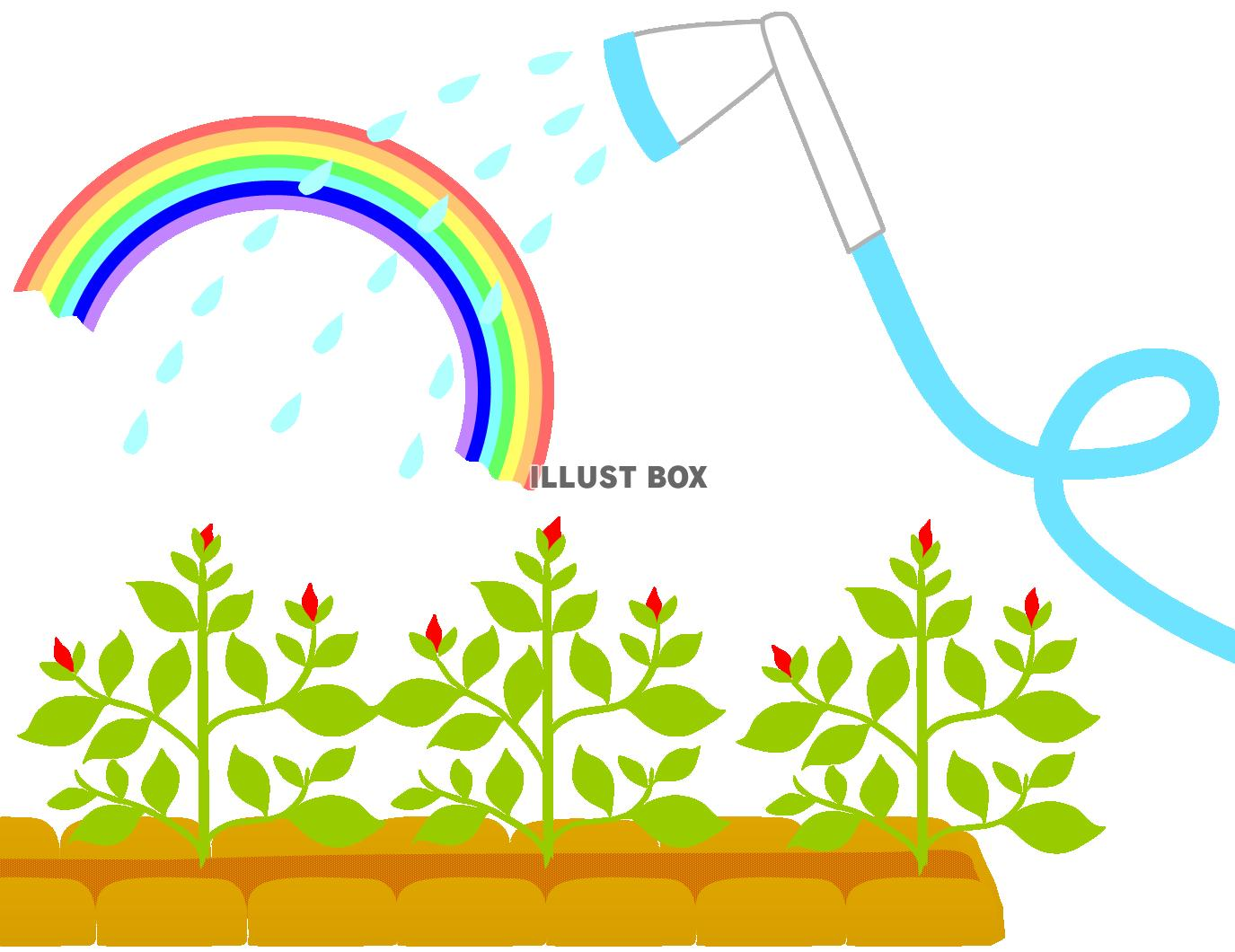 無料イラスト ホースで水やり2ガーデニング園芸育てる虹