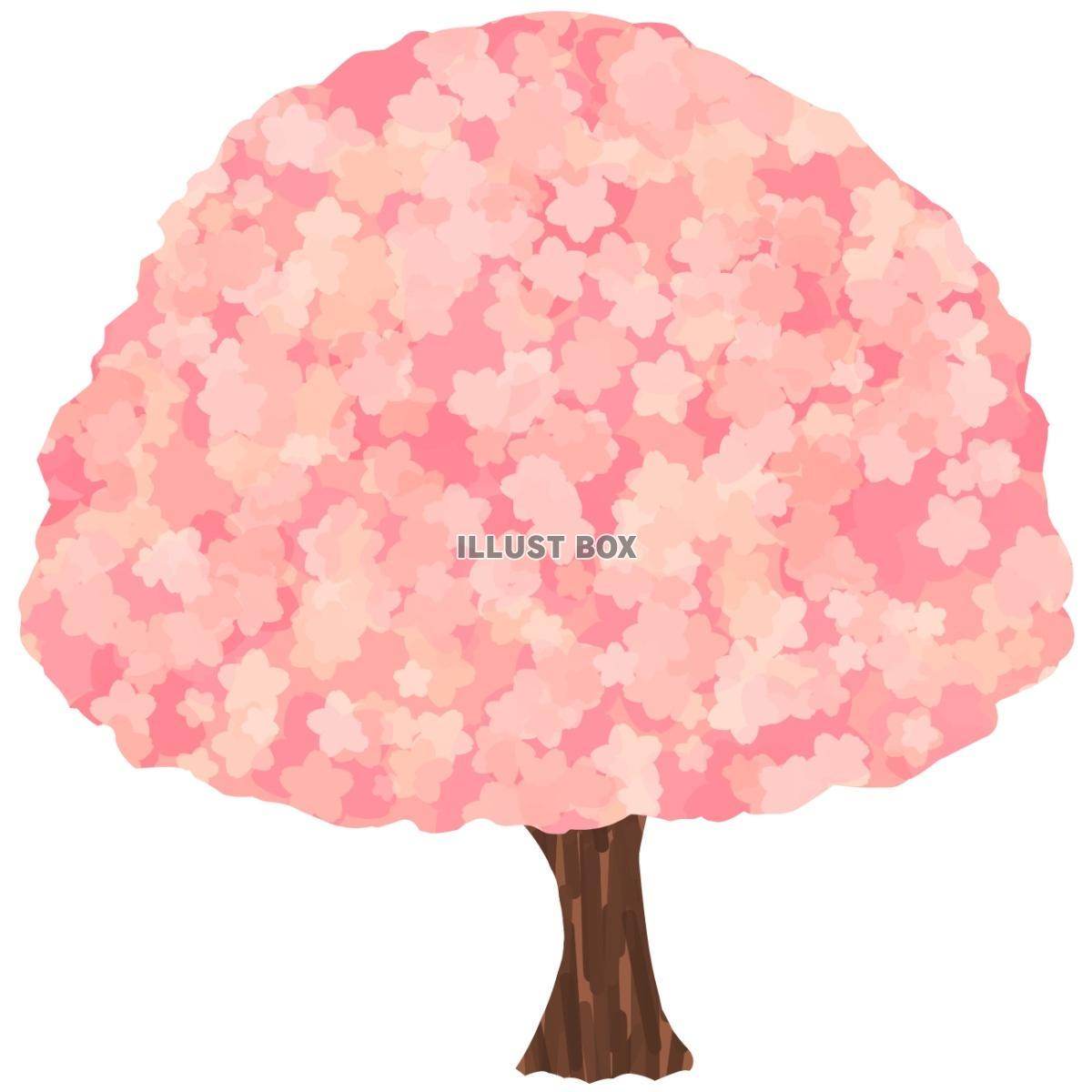 無料イラスト 桜の木