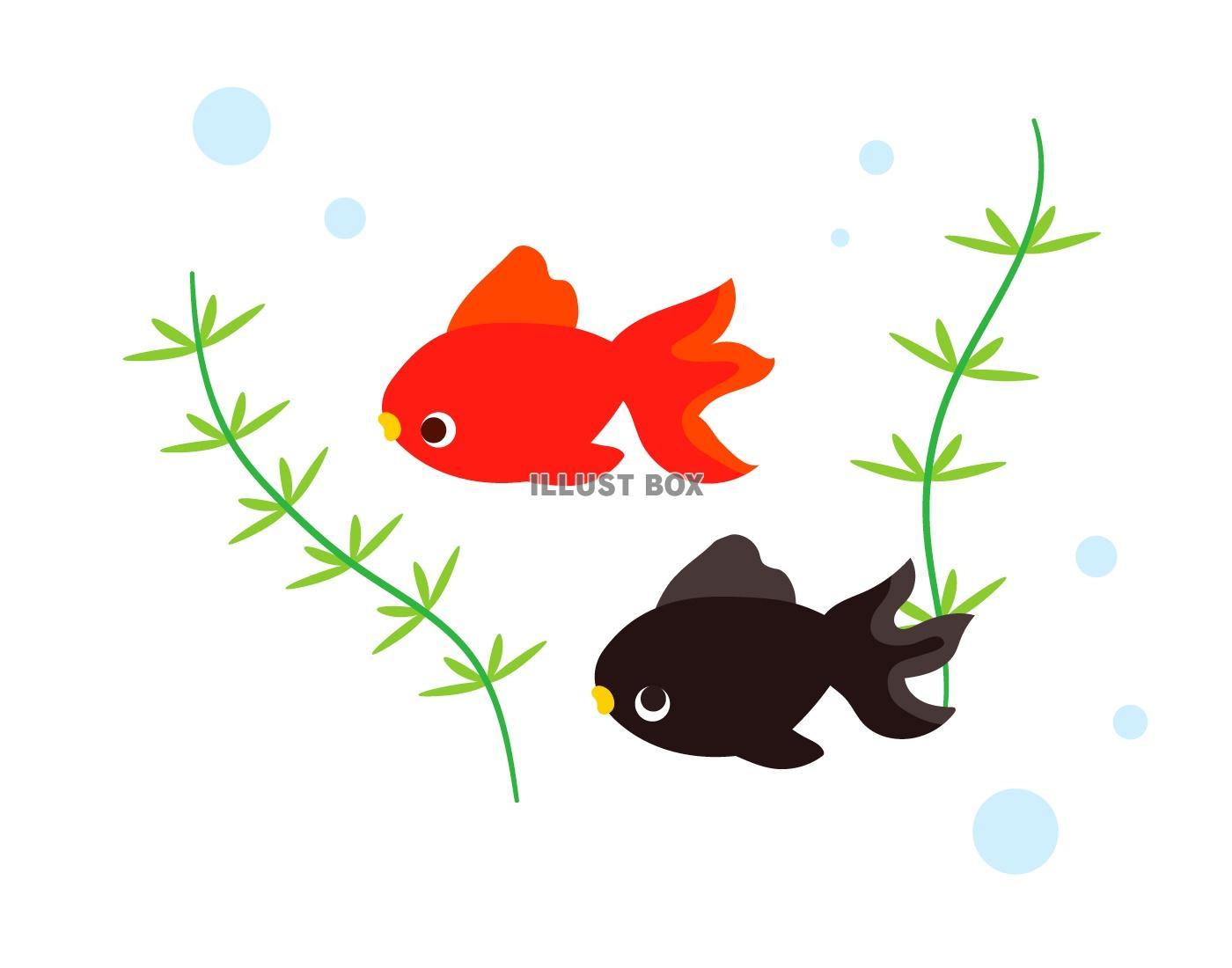無料イラスト 金魚1