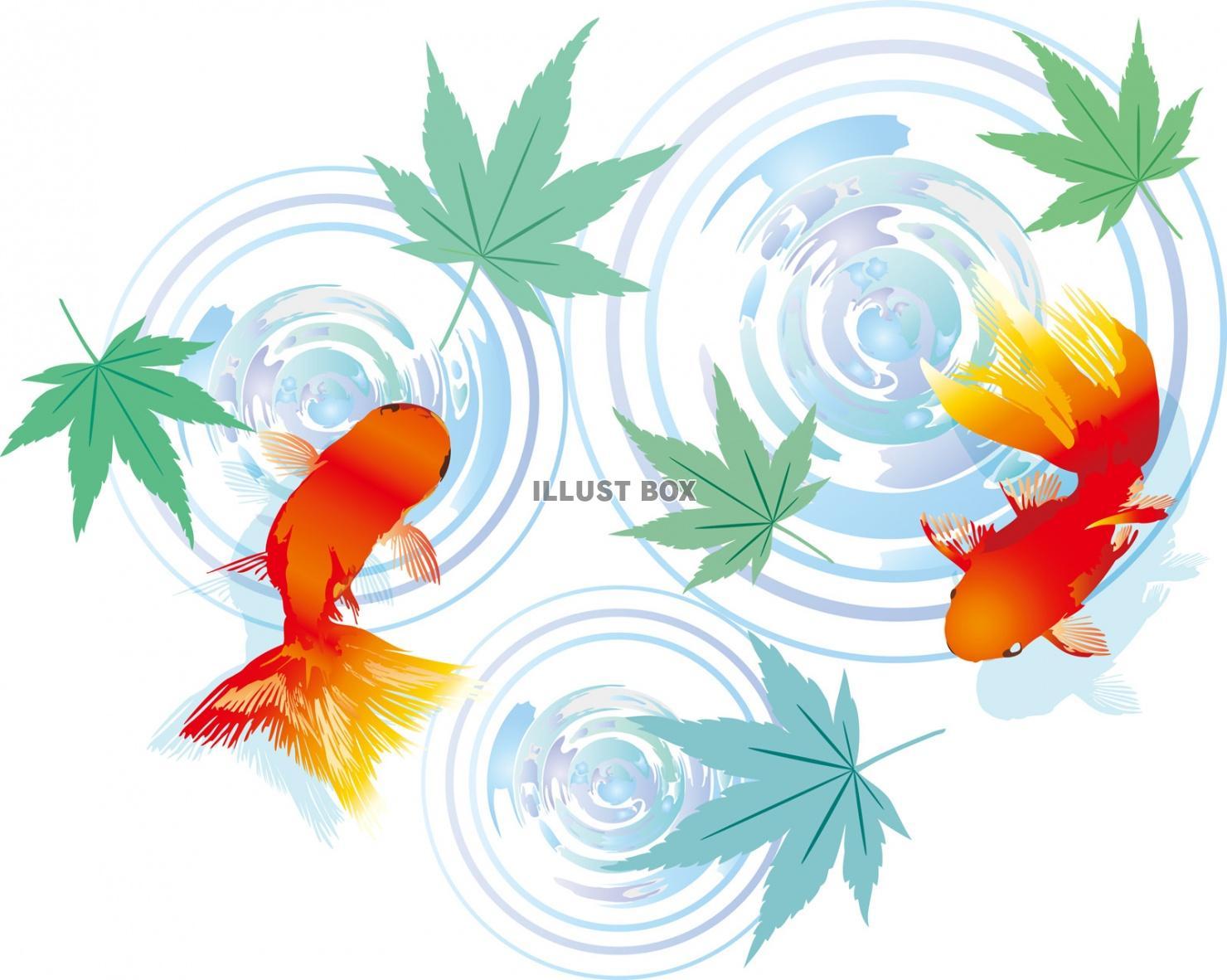 無料イラスト 青紅葉金魚イラストもみじ和和風和柄波紋新緑