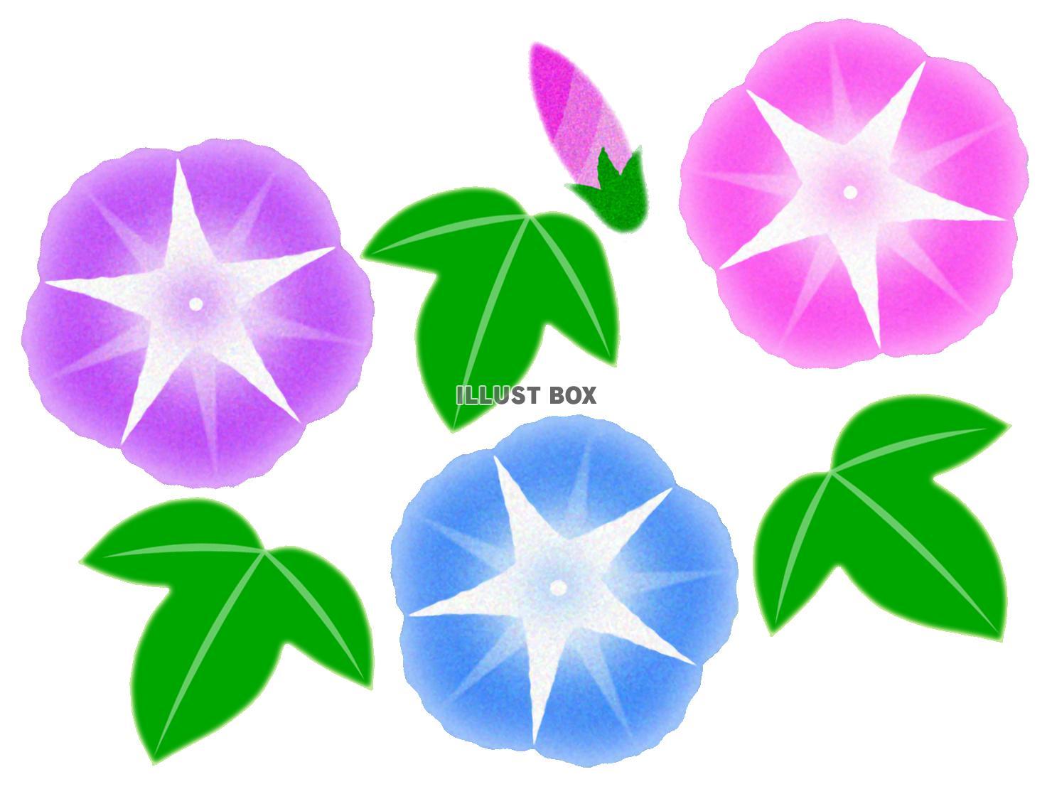 無料イラスト 朝顔イラスト背景素材アサガオの花模様壁紙透過png