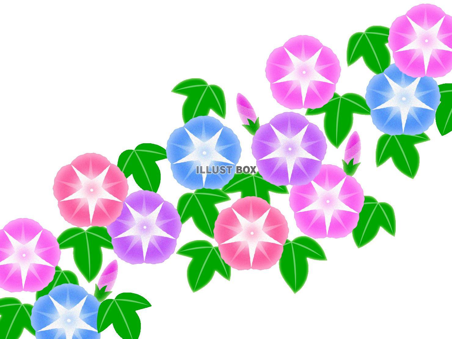 無料イラスト 朝顔イラスト背景素材アサガオの花模様壁紙。透過png