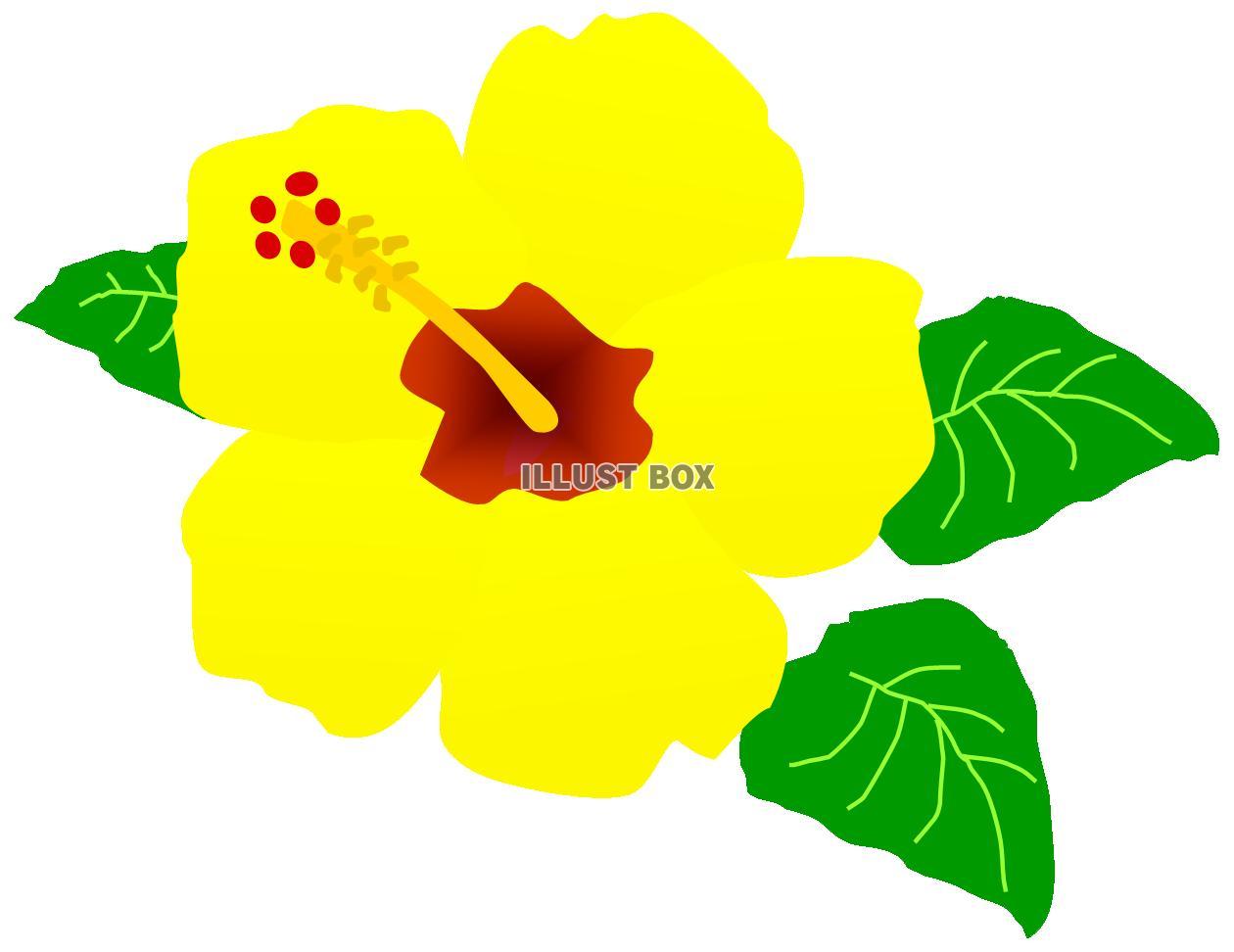 無料イラスト ハイビスカスのお花 黄色 夏 南国 トロピカル