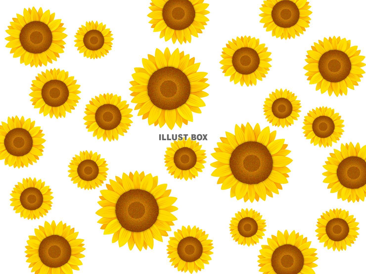 無料イラスト ひまわりの壁紙 向日葵の背景素材イラスト 透過png