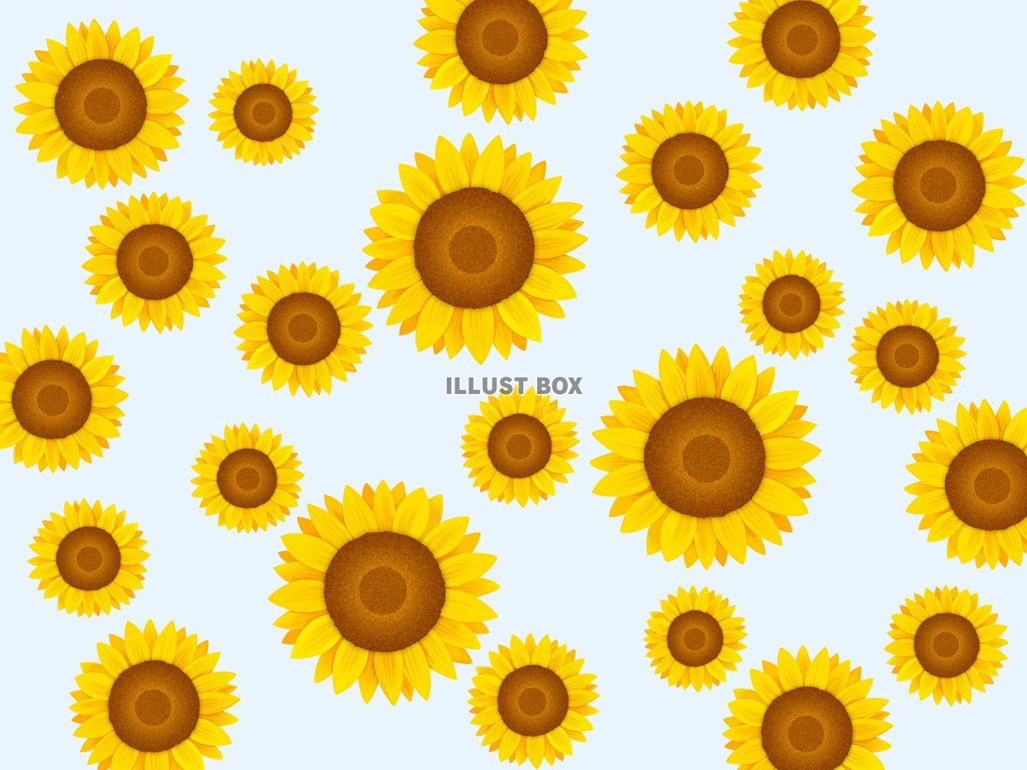 無料イラスト ひまわりの壁紙 向日葵の背景素材イラスト