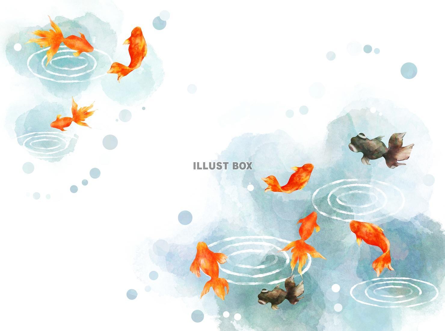 無料イラスト 金魚