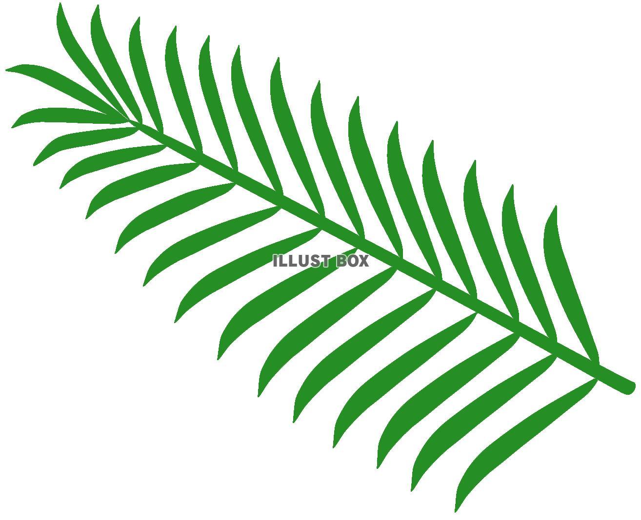 無料イラスト ヤシの木の葉っぱ 1 椰子 やし 果物 夏 南国